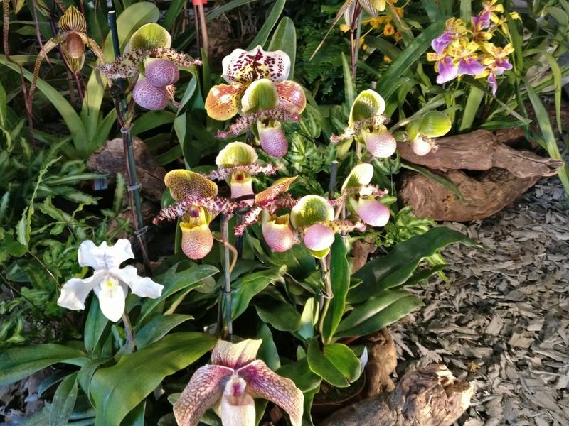 la journée des plantes au domaine de chantilly Img_2156