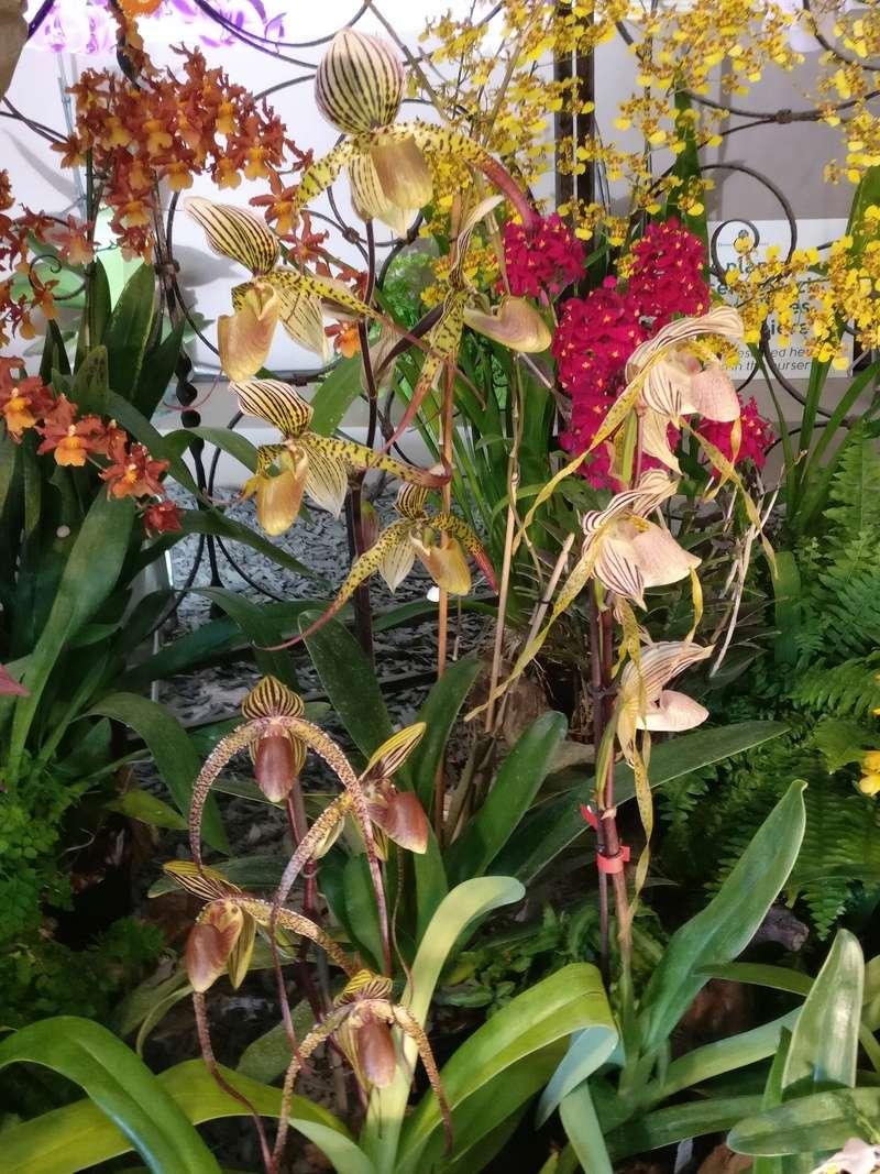 la journée des plantes au domaine de chantilly Img_2165