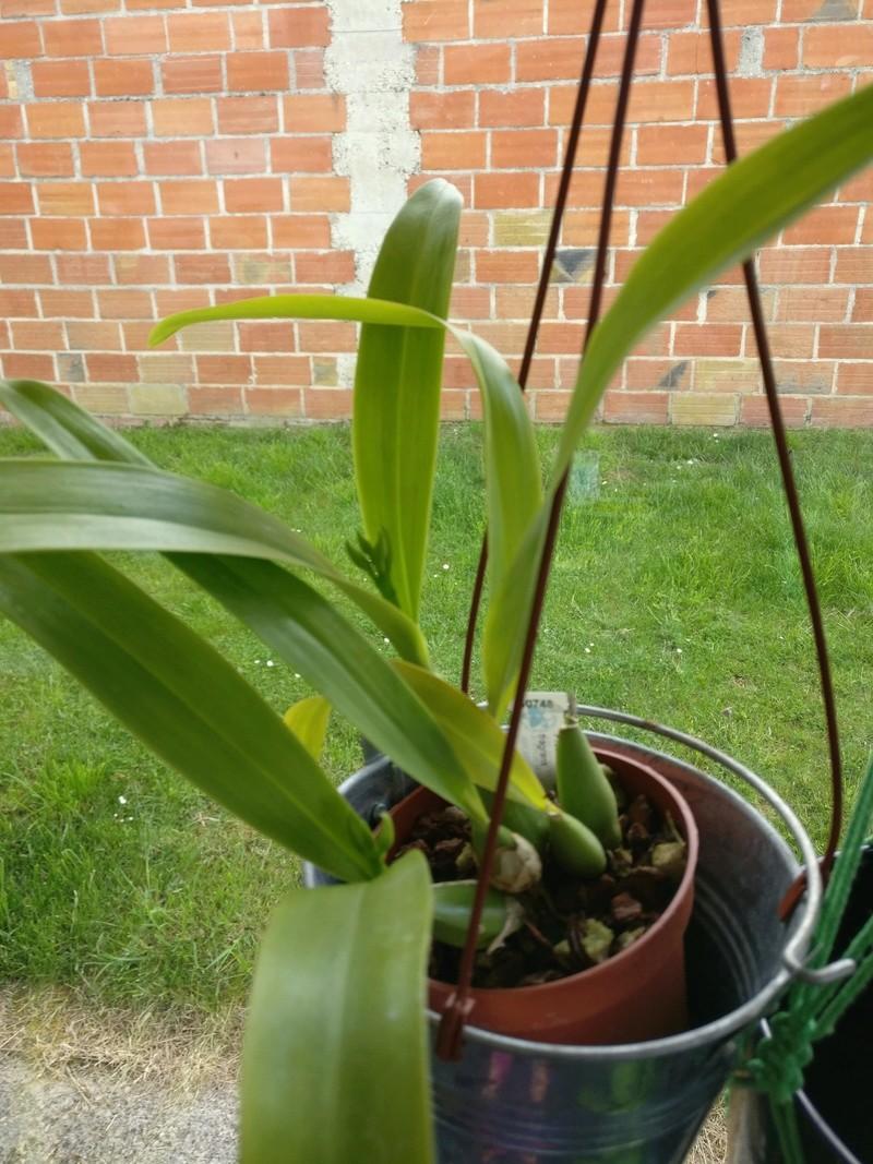la journée des plantes au domaine de chantilly Img_2169