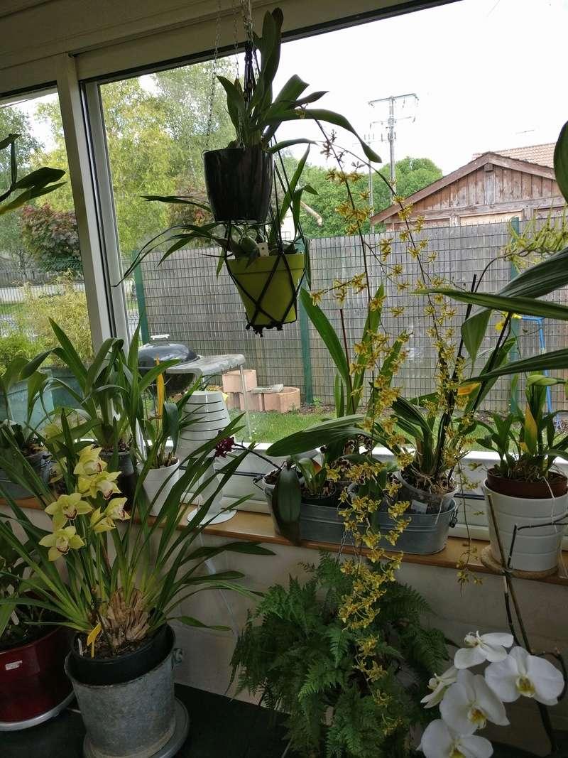 la journée des plantes au domaine de chantilly Img_2172