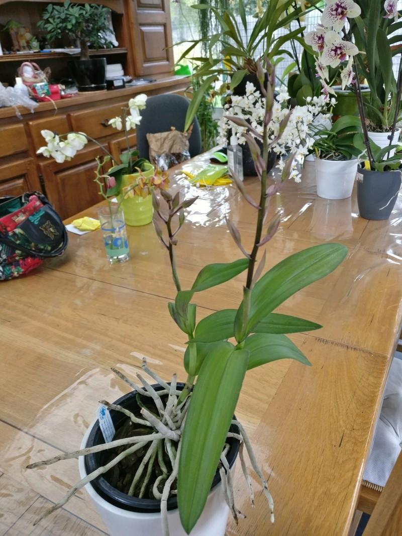 la journée des plantes au domaine de chantilly Img_2174