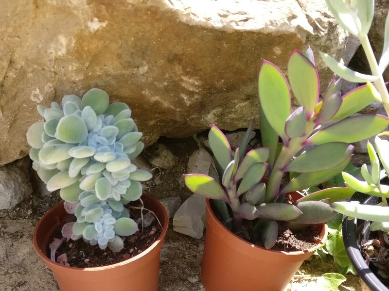la journée des plantes au domaine de chantilly Img_2175