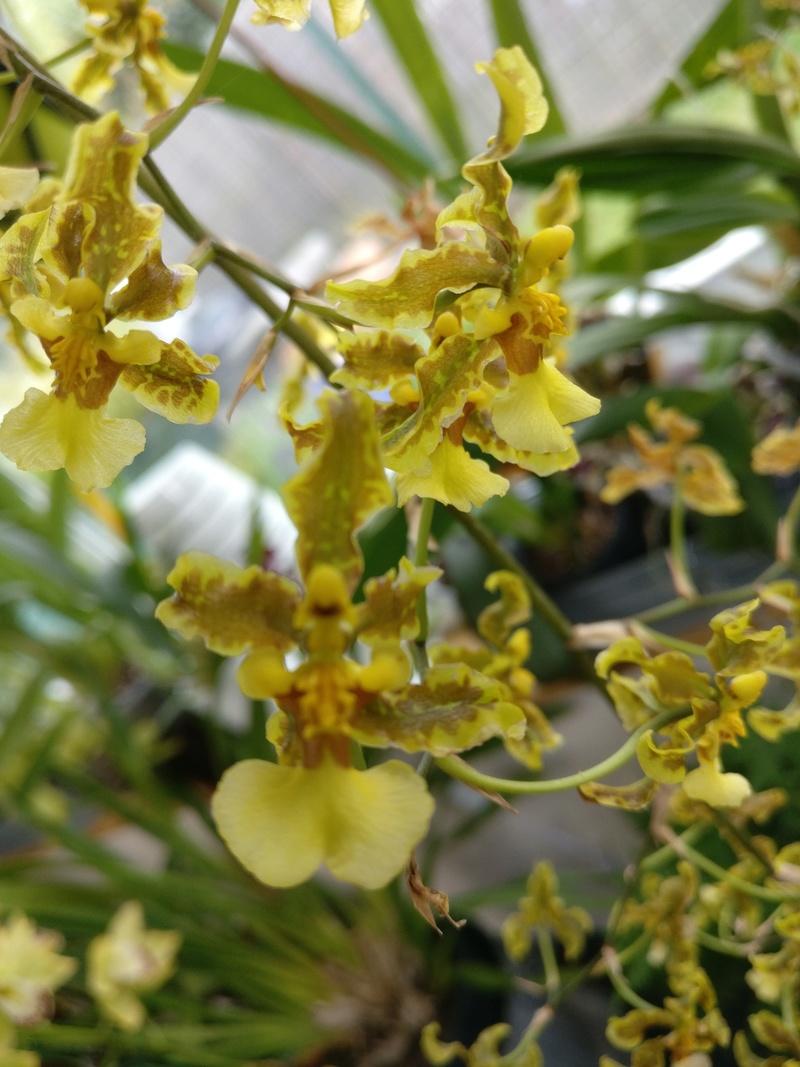 la journée des plantes au domaine de chantilly Img_2178