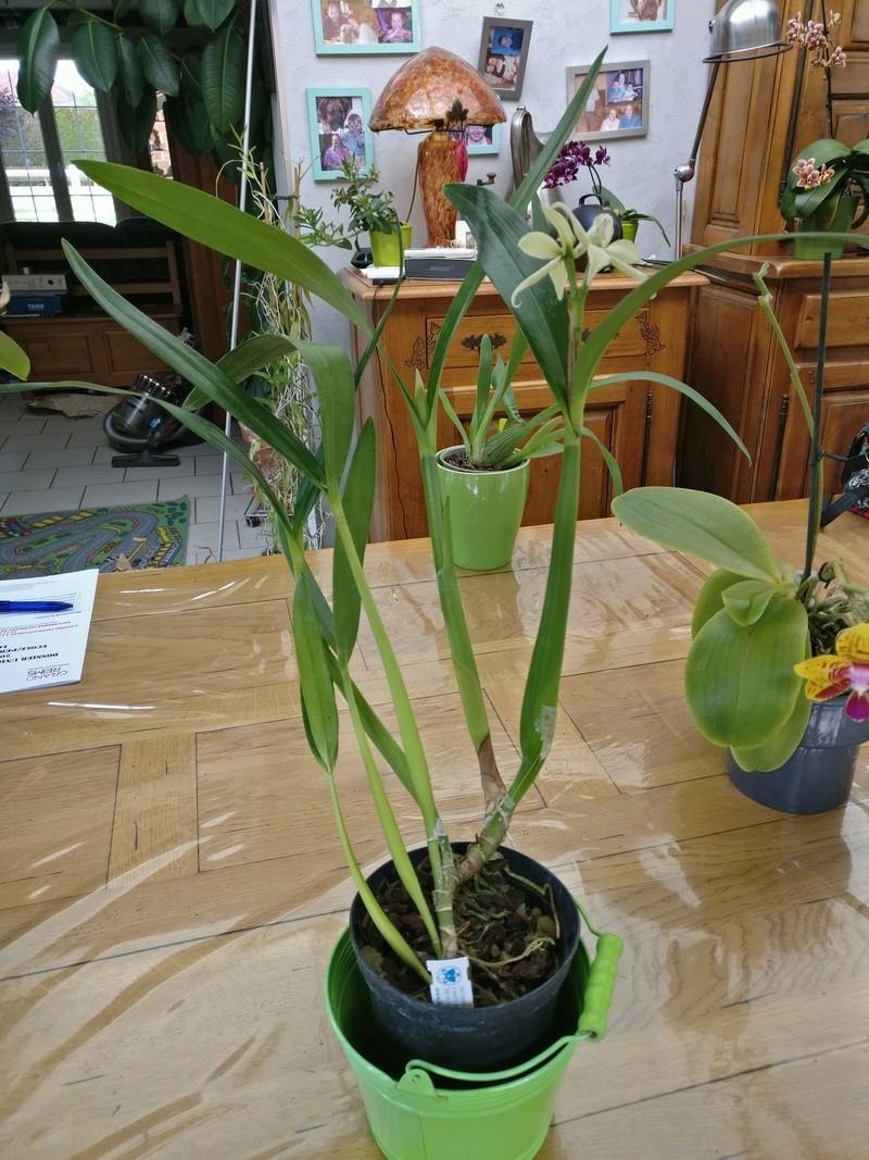 la journée des plantes au domaine de chantilly Img_2179