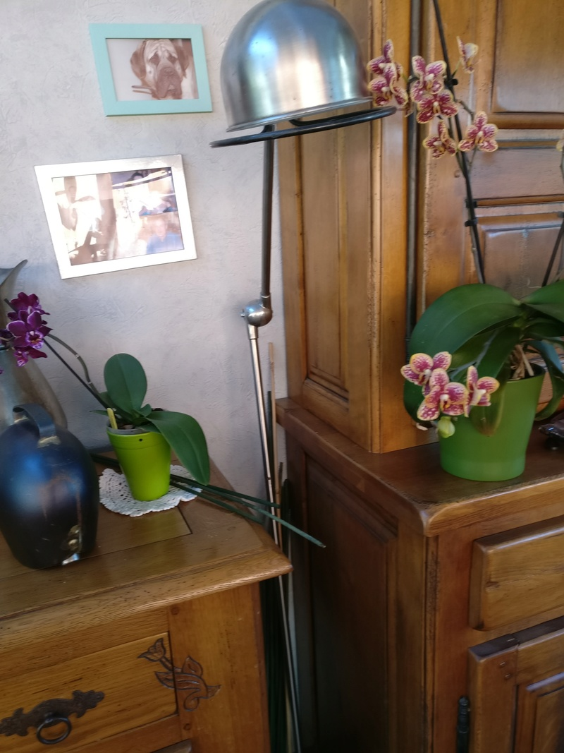 la journée des plantes au domaine de chantilly Img_2193