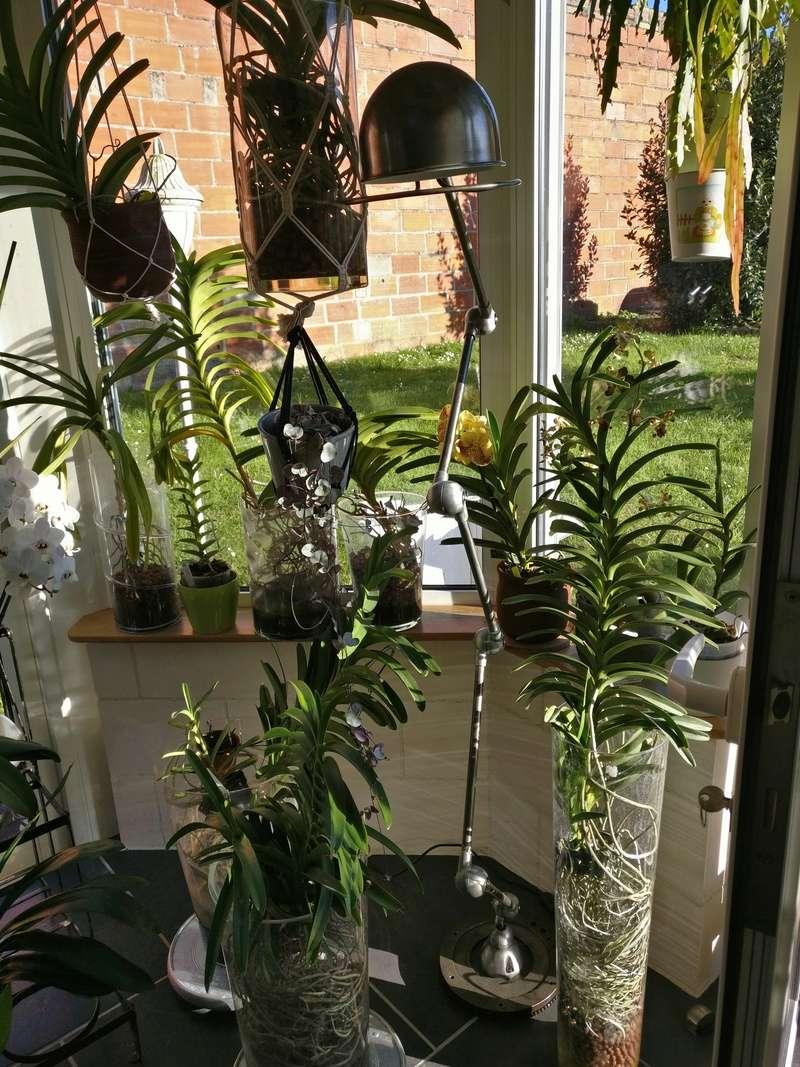 la journée des plantes au domaine de chantilly Img_2195