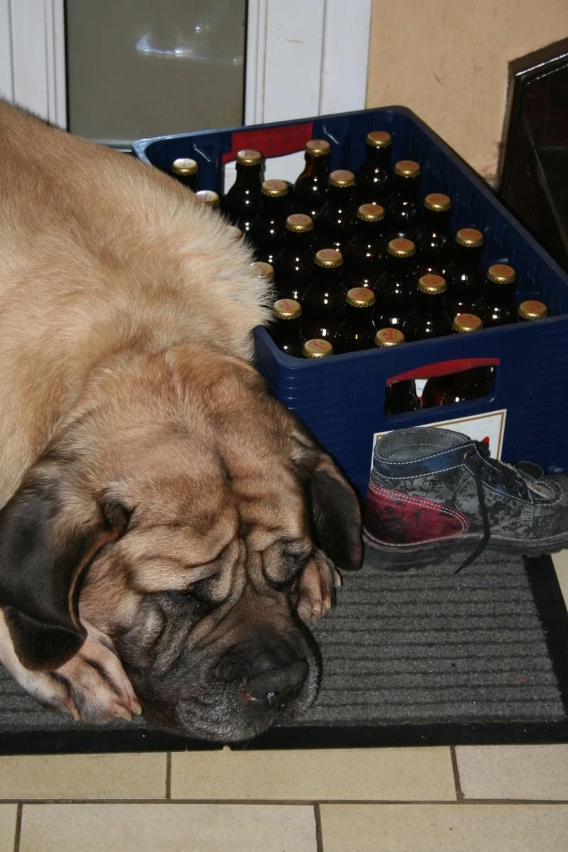 mon chien est alcoolique !!!  - Page 3 Img_7937