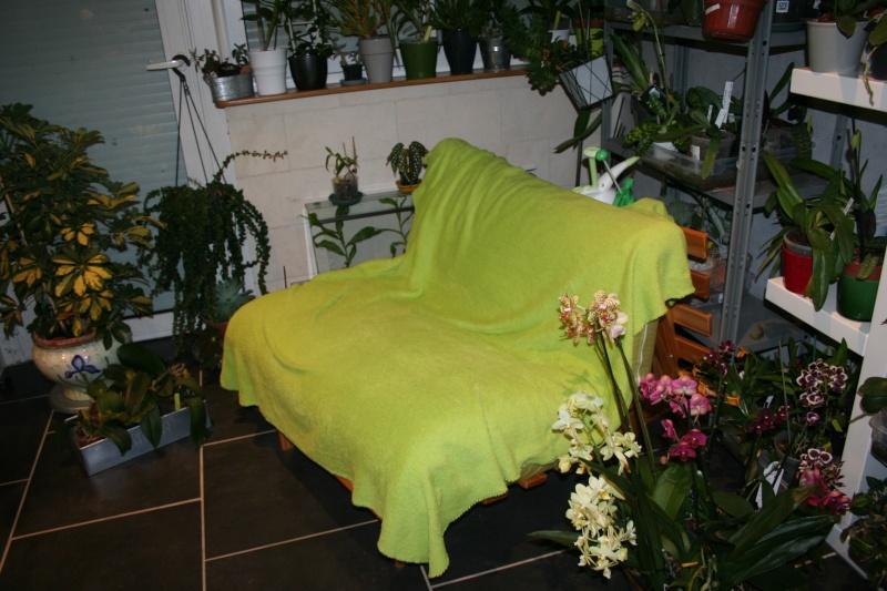 ma véranda, mon petit paradis végétal ... - Page 21 Img_8016
