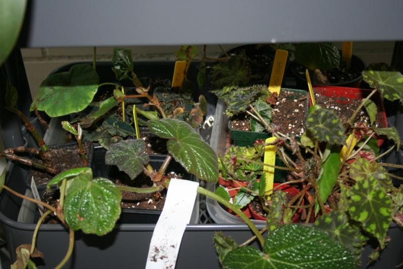 ma véranda, mon petit paradis végétal ... - Page 22 Img_8022