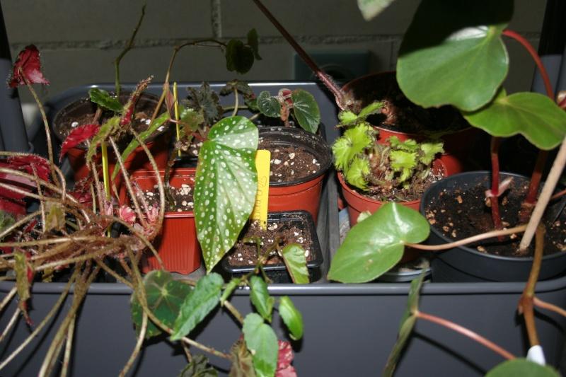 ma véranda, mon petit paradis végétal ... - Page 22 Img_8023