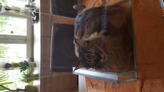 Isoler un terrarium en verre  20160810