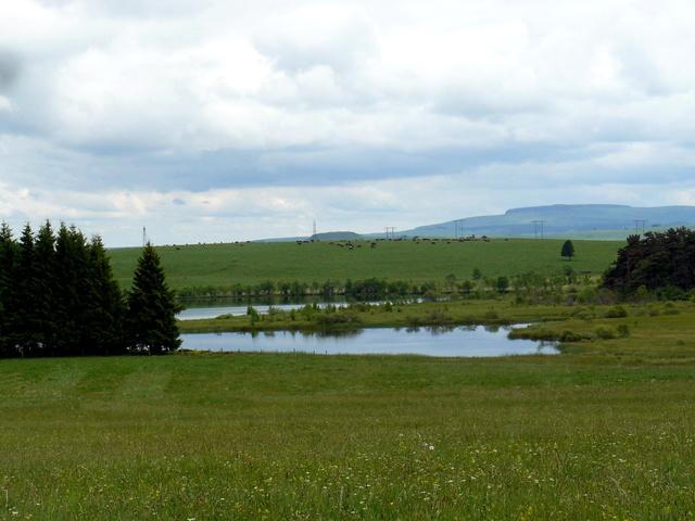 Lac et tourbière de Bourdouze (63) P1360712