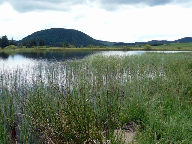 Lac et tourbière de Bourdouze (63) P1360713