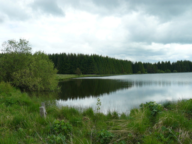 Lac et tourbière de Bourdouze (63) P1360715