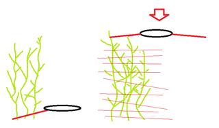 Comment faire revivre un sol épuisé ? Schym10