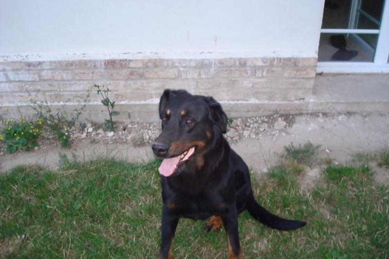 Perdu 2 chiens Dsc02410