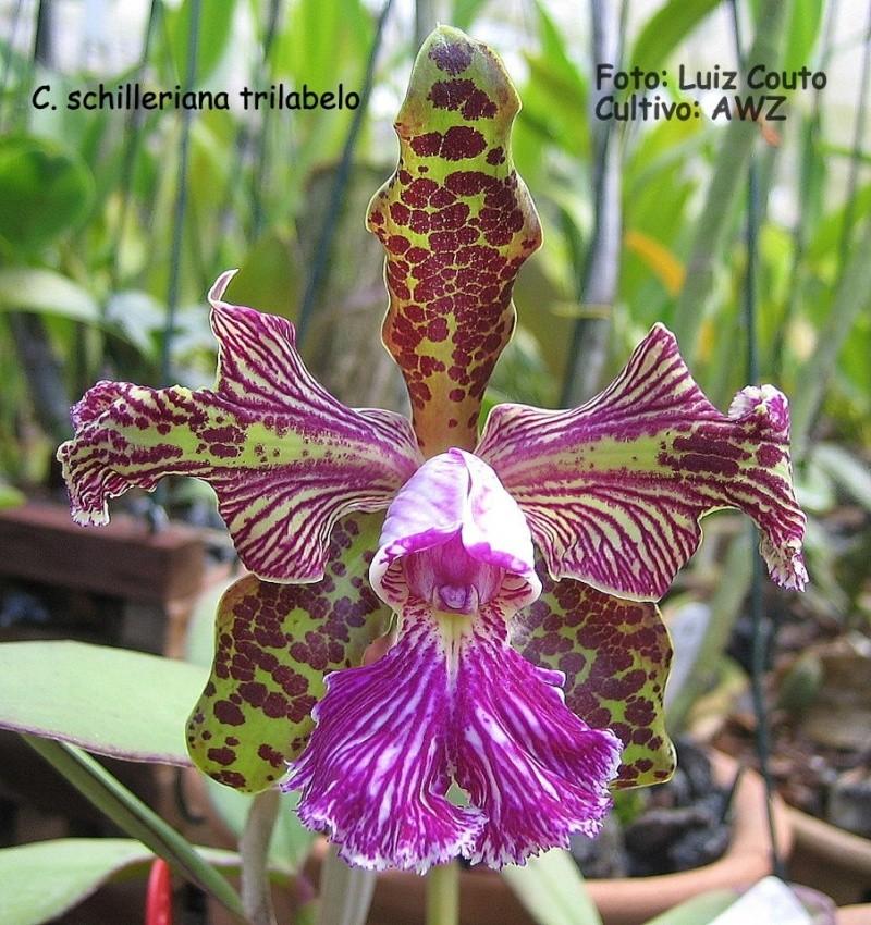 Photos d'orchidées inédites   12923_10