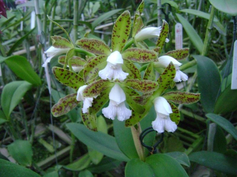 Photos d'orchidées inédites   14840810