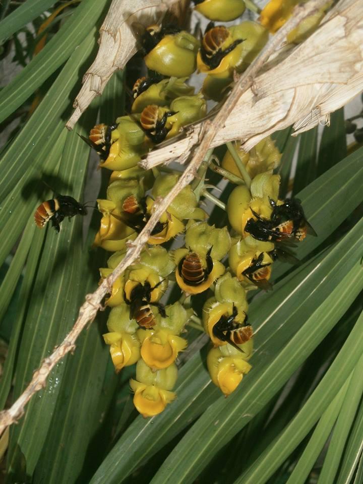 Photos d'orchidées inédites   15052910