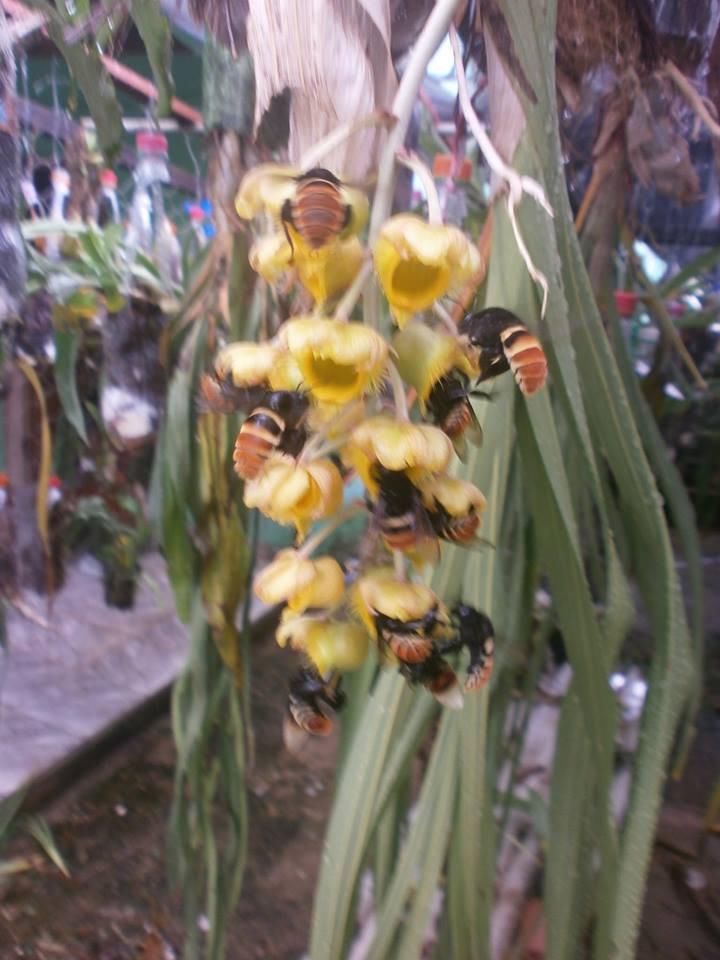 Photos d'orchidées inédites   15133010
