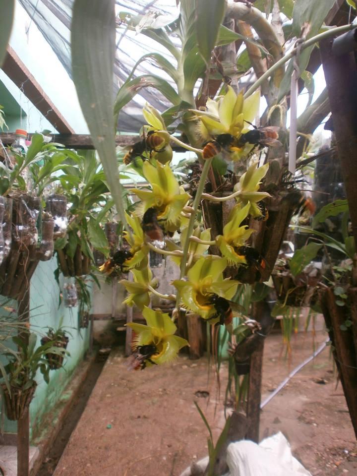 Photos d'orchidées inédites   15206910