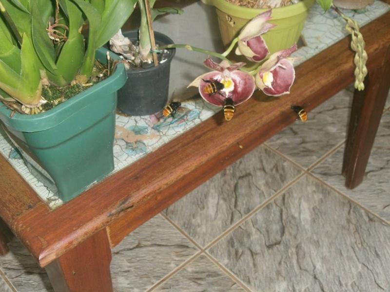 Photos d'orchidées inédites   15303410