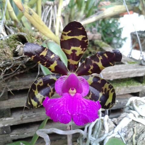 Photos d'orchidées inédites   15305810