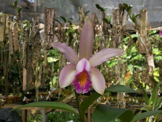 Photos d'orchidées inédites   16560510