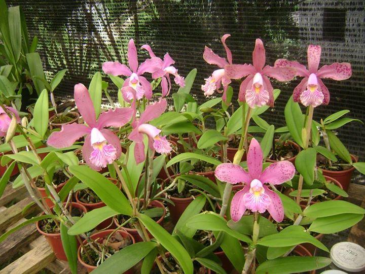 Photos d'orchidées inédites   16618410