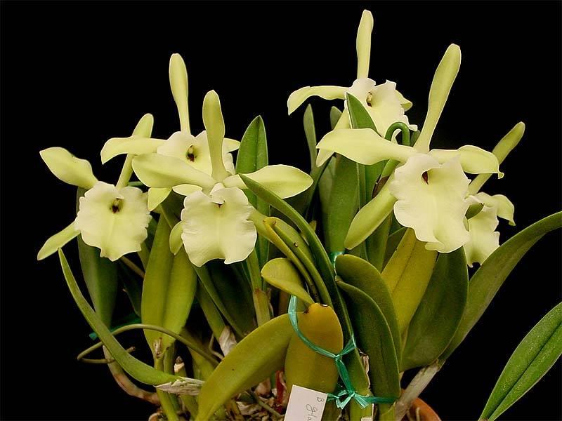 Photos d'orchidées inédites   18967810