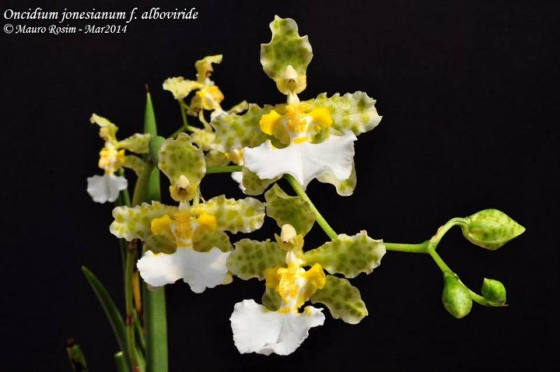 Photos d'orchidées inédites   19000110