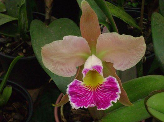Photos d'orchidées inédites   38623510