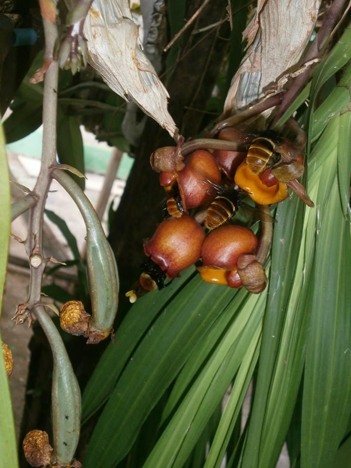 Photos d'orchidées inédites   99349810