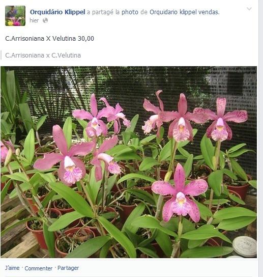Photos d'orchidées inédites   Captur30
