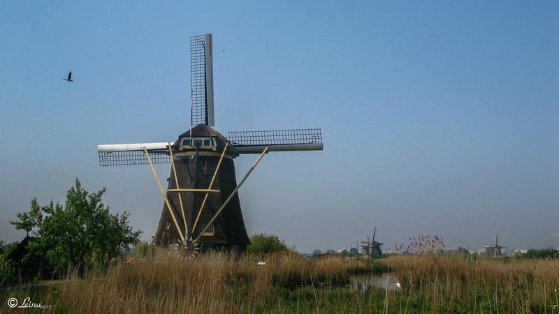 Au pays des tulipes Hollan10