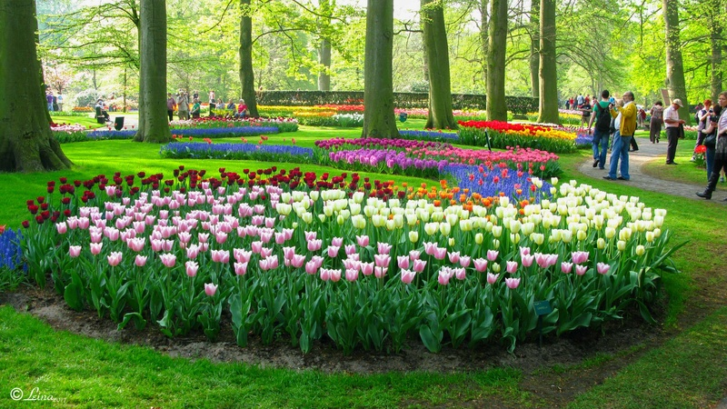 Au pays des tulipes Hollan11