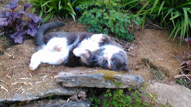 pour les amoureux des chats P_201116
