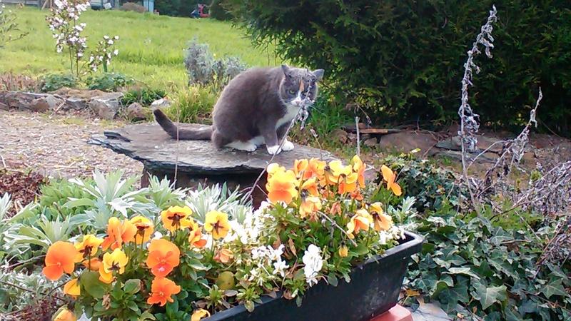 pour les amoureux des chats P_201117