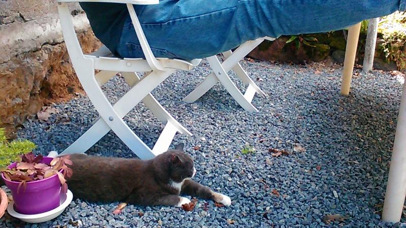 pour les amoureux des chats - Page 3 P_201194