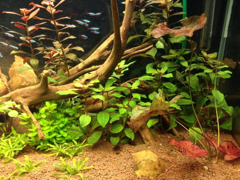Bac Ciano 175L Amazonien Photo-10