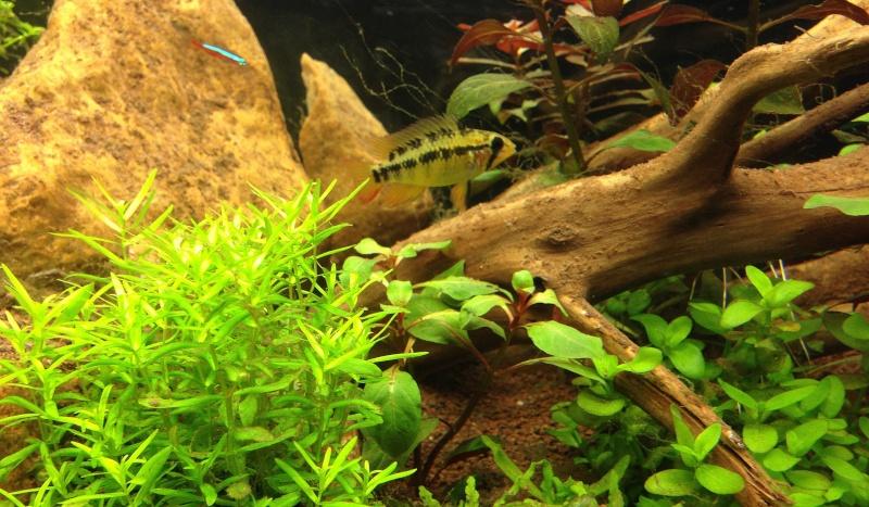 Bac Ciano 175L Amazonien Photo-11