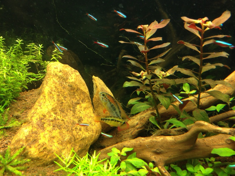 Bac Ciano 175L Amazonien Photo-12