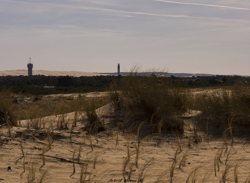 Entre océan, érosion, bassin et mimosa (Rando Cap Ferret - 23/02/14) P1130810
