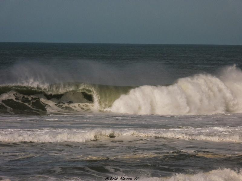 Entre océan, érosion, bassin et mimosa (Rando Cap Ferret - 23/02/14) P1130813