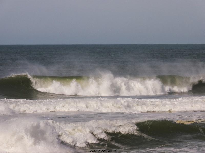 Entre océan, érosion, bassin et mimosa (Rando Cap Ferret - 23/02/14) P1130814