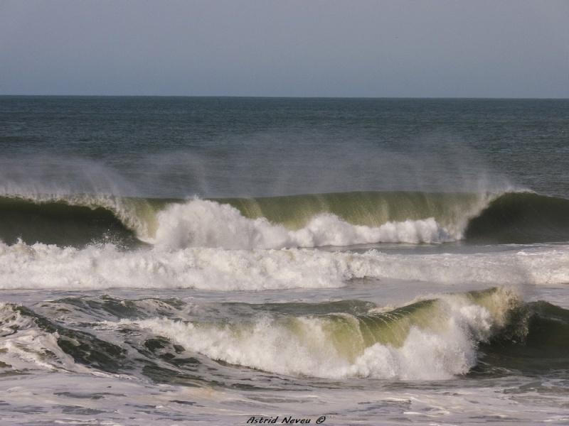 Entre océan, érosion, bassin et mimosa (Rando Cap Ferret - 23/02/14) P1130815