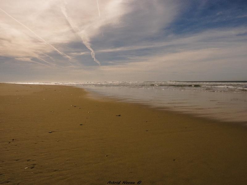 Entre océan, érosion, bassin et mimosa (Rando Cap Ferret - 23/02/14) P1130825