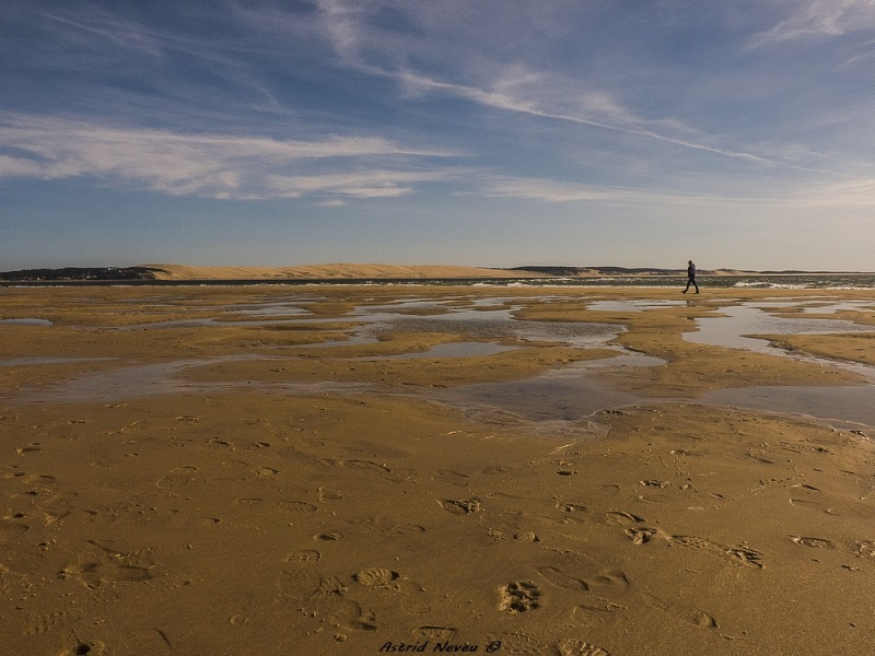Entre océan, érosion, bassin et mimosa (Rando Cap Ferret - 23/02/14) P1130912