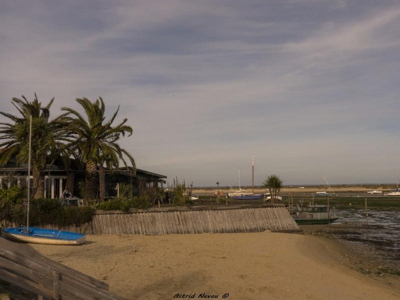 Entre océan, érosion, bassin et mimosa (Rando Cap Ferret - 23/02/14) P1130917