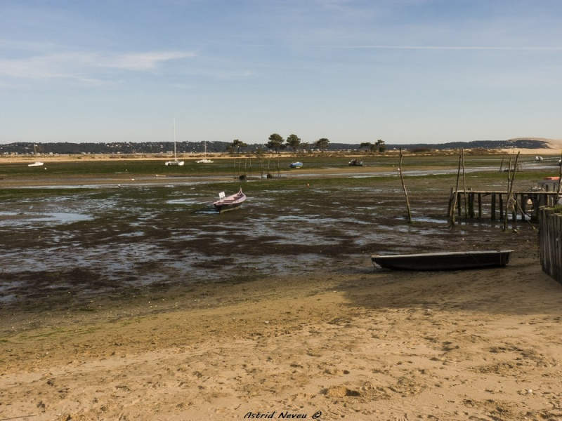 Entre océan, érosion, bassin et mimosa (Rando Cap Ferret - 23/02/14) P1130918